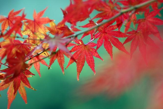 ぜひ行きたい!西東京エリアの紅葉スポット